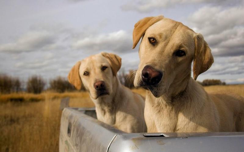 antibiótico para la prostatitis del perro para la venta